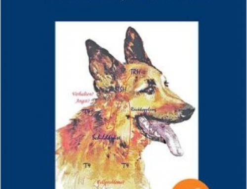 Schilddrüse und Verhalten: Schilddrüsenunterfunktion beim Hund