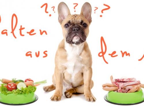 Verhalten aus dem Napf – Dein Hund ist was er is(s)t