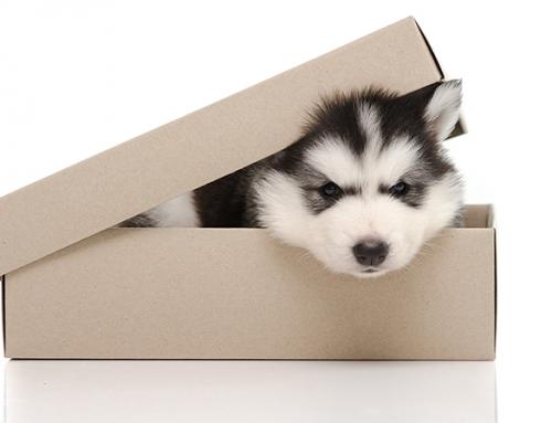 Daran erkennst Du unseriöse Hundeverkäufer